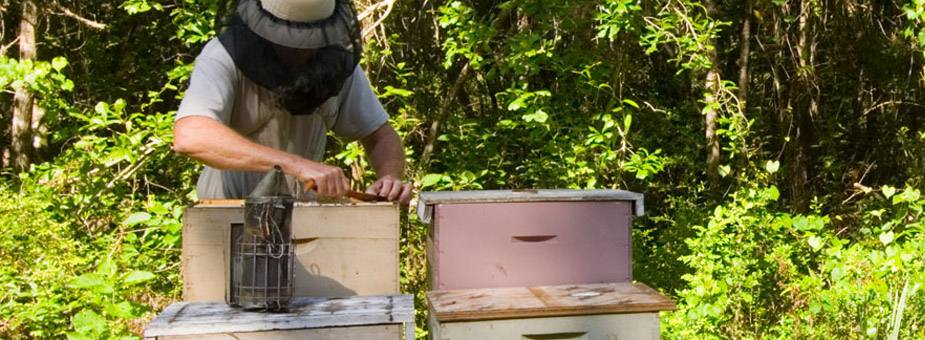 Photo of a beekeeper at Wewahitchka, FL